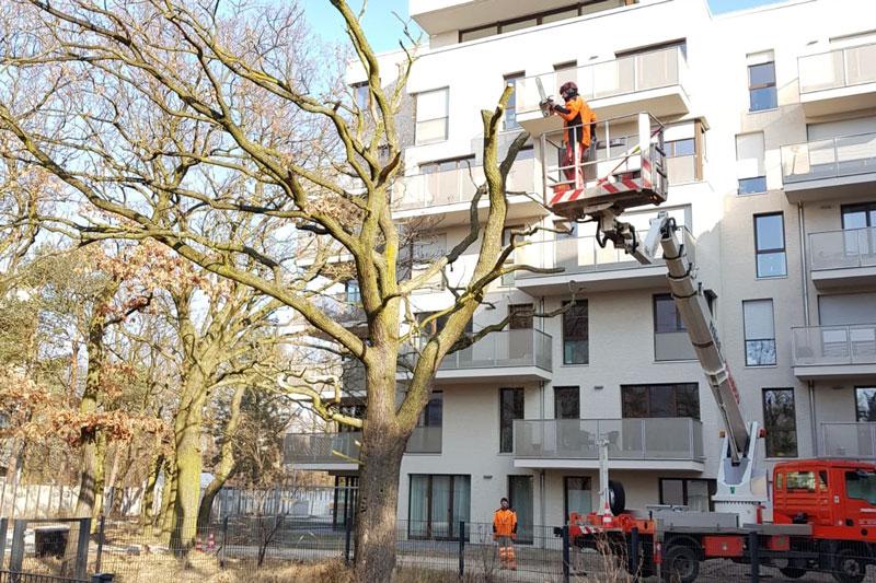Baumpflege - Biotop Baumdienst GmbH